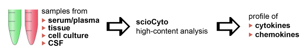 scioCyto analysis process